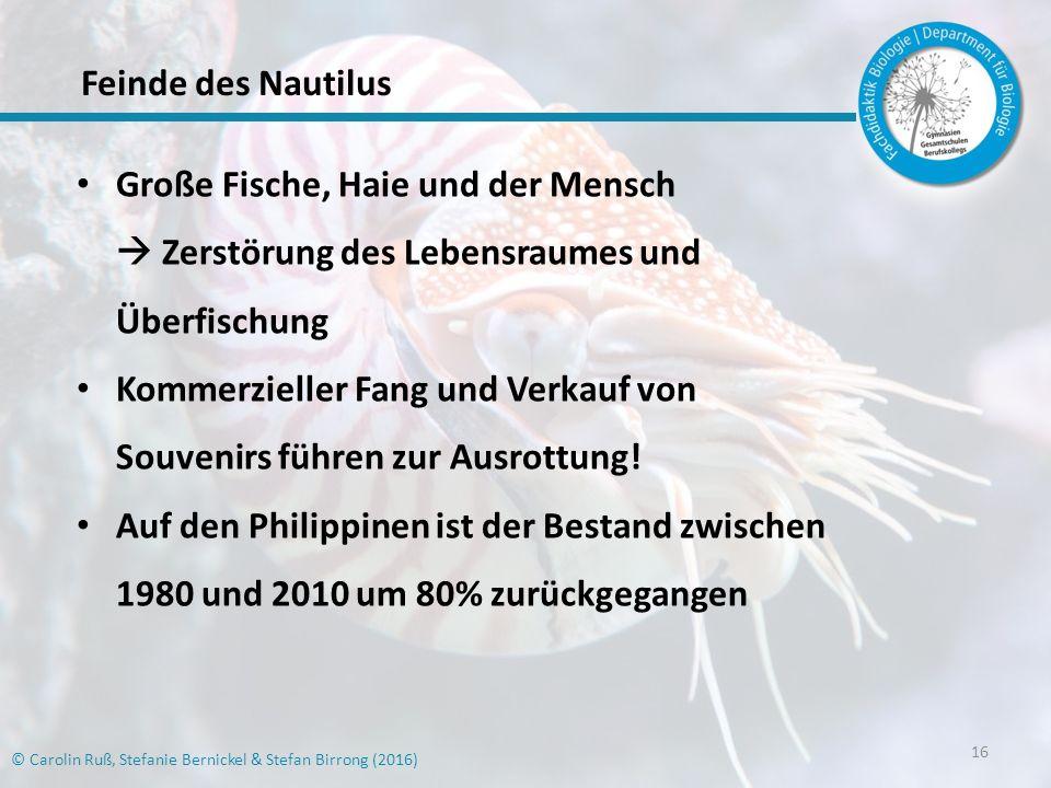 16 Große Fische, Haie und der Mensch  Zerstörung des Lebensraumes und Überfischung Kommerzieller Fang und Verkauf von Souvenirs führen zur Ausrottung.