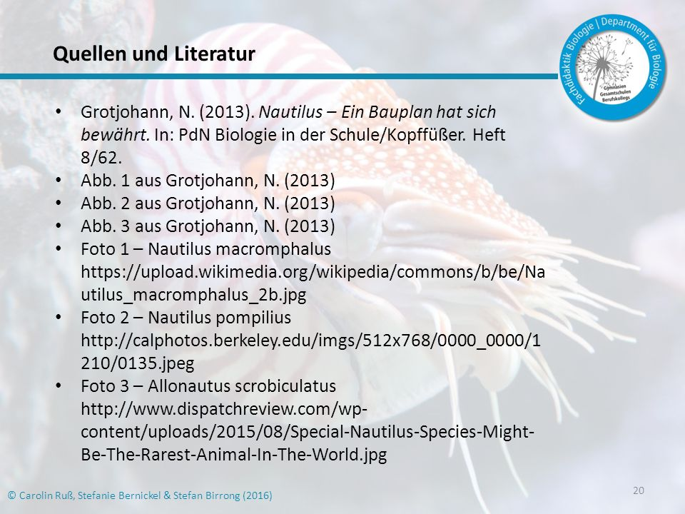 20 © Carolin Ruß, Stefanie Bernickel & Stefan Birrong (2016) Quellen und Literatur Grotjohann, N.