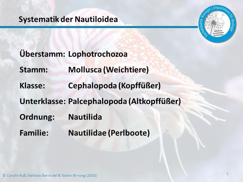 6 © Carolin Ruß, Stefanie Bernickel & Stefan Birrong (2016) Systematik der Nautiloidea Abb.
