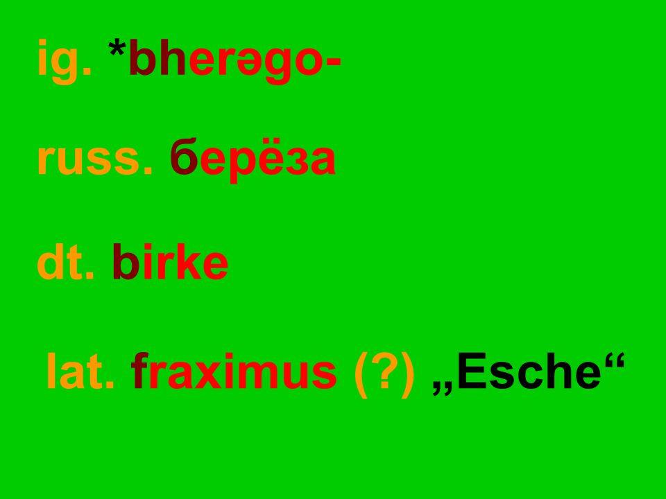"""ig. *bherəgo- dt. birke russ. берёза lat. fraximus (?) """"Esche"""""""
