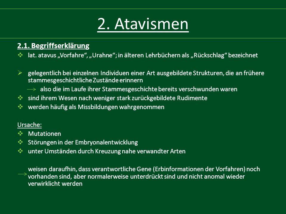 """2. Atavismen 2.1. Begriffserklärung  lat. atavus """"Vorfahre"""", """"Urahne""""; in älteren Lehrbüchern als """"Rückschlag"""" bezeichnet  gelegentlich bei einzelne"""