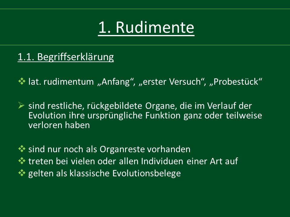 """1. Rudimente 1.1. Begriffserklärung  lat. rudimentum """"Anfang"""", """"erster Versuch"""", """"Probestück""""  sind restliche, rückgebildete Organe, die im Verlauf"""