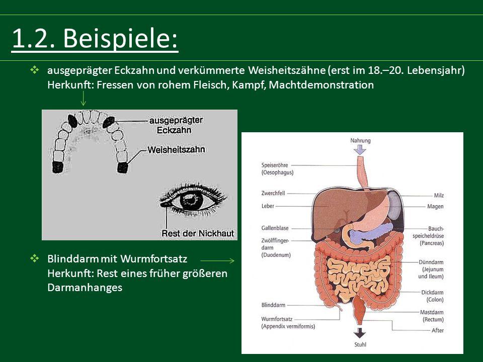 3.2.Buchquellen:  Biologiebuch  Abiturwissen, Biologie, Dudenverlag, Hrsg.