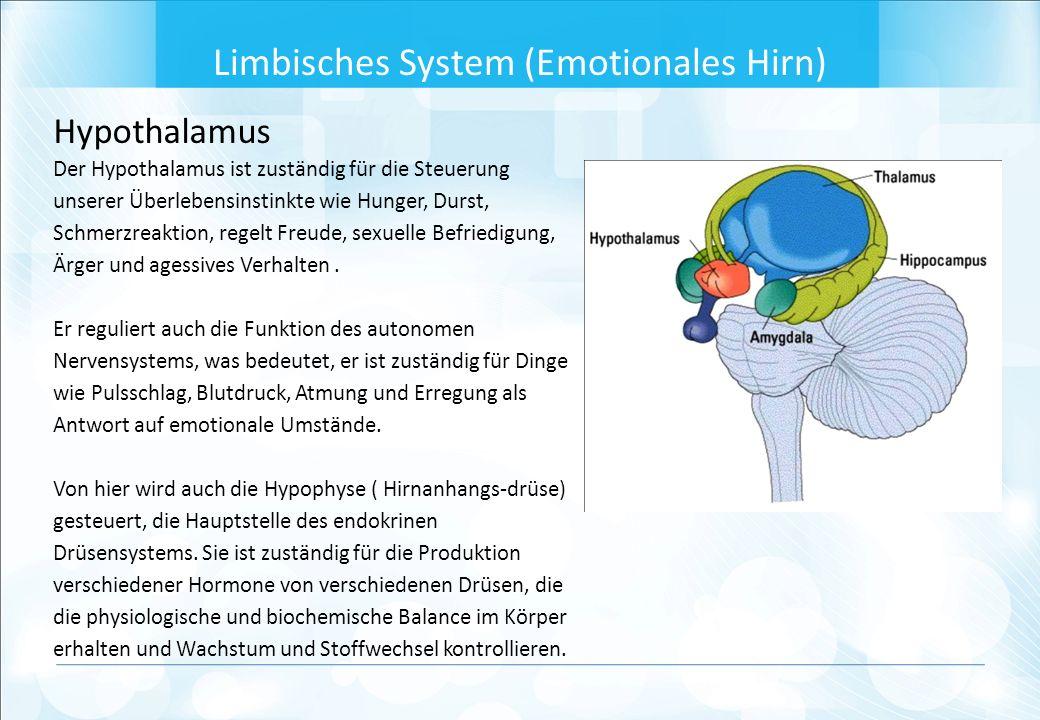 Hypothalamus Der Hypothalamus ist zuständig für die Steuerung unserer Überlebensinstinkte wie Hunger, Durst, Schmerzreaktion, regelt Freude, sexuelle Befriedigung, Ärger und agessives Verhalten.