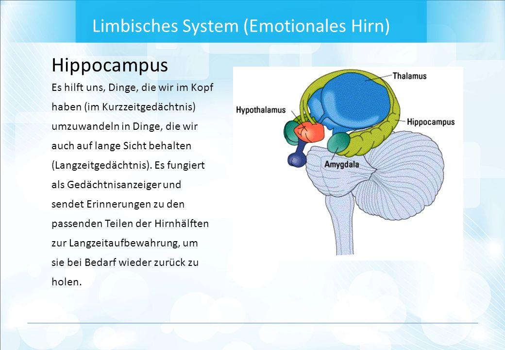 Hippocampus Es hilft uns, Dinge, die wir im Kopf haben (im Kurzzeitgedächtnis) umzuwandeln in Dinge, die wir auch auf lange Sicht behalten (Langzeitgedächtnis).