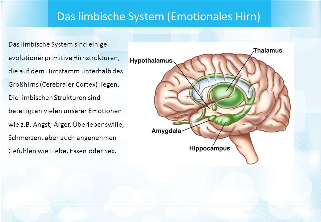 Das limbische System (Emotionales Hirn) Das limbische System sind einige evolutionär primitive Hirnstrukturen, die auf dem Hirnstamm unterhalb des Großhirns (Cerebraler Cortex) liegen.