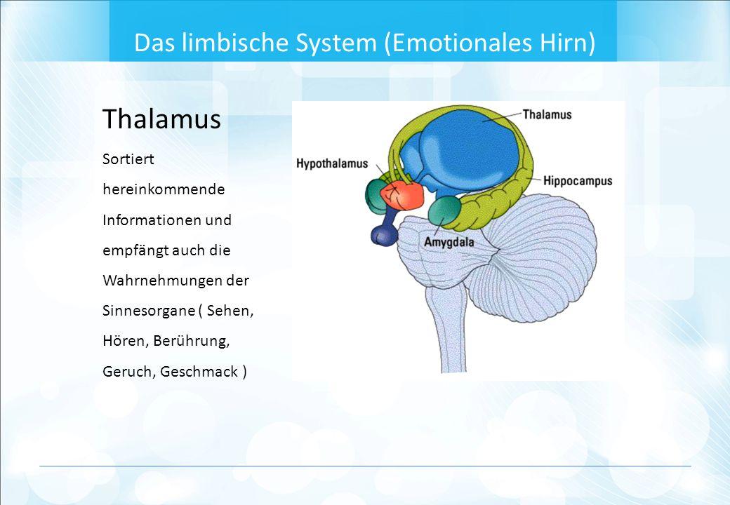 Thalamus Sortiert hereinkommende Informationen und empfängt auch die Wahrnehmungen der Sinnesorgane ( Sehen, Hören, Berührung, Geruch, Geschmack ) Das limbische System (Emotionales Hirn)