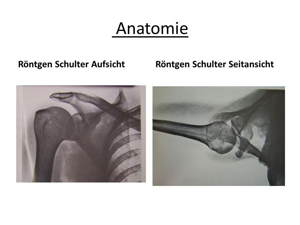Anatomie Röntgen Schulter AufsichtRöntgen Schulter Seitansicht