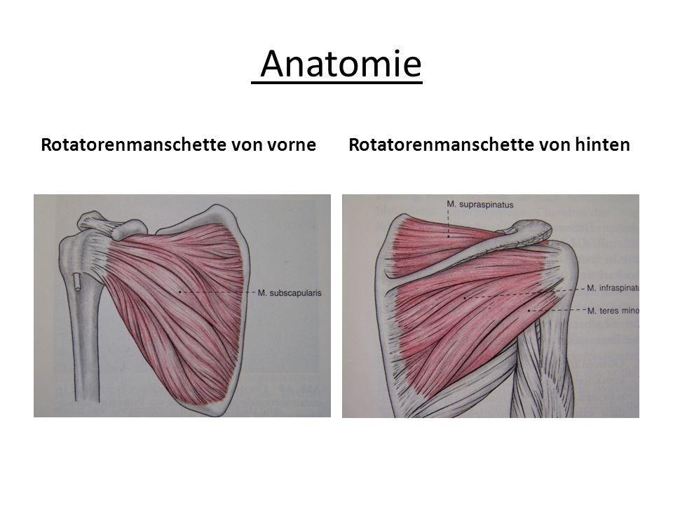 Anatomie Rotatorenmanschette von vorneRotatorenmanschette von hinten