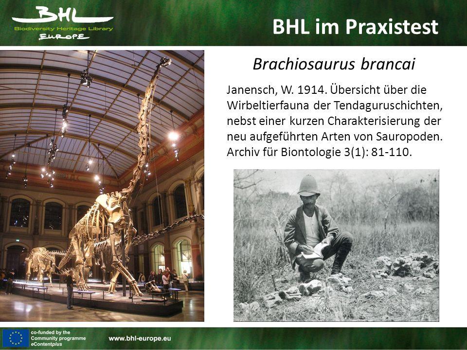BHL im Praxistest Brachiosaurus brancai Janensch, W. 1914. Übersicht über die Wirbeltierfauna der Tendaguruschichten, nebst einer kurzen Charakterisie