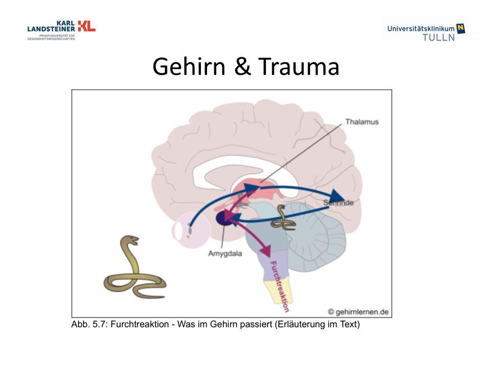 Gehirn & Trauma
