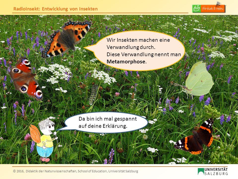 RadioInsekt: Entwicklung von Insekten © 2016, Didaktik der Naturwissenschaften, School of Education, Universität Salzburg Da bin ich mal gespannt auf