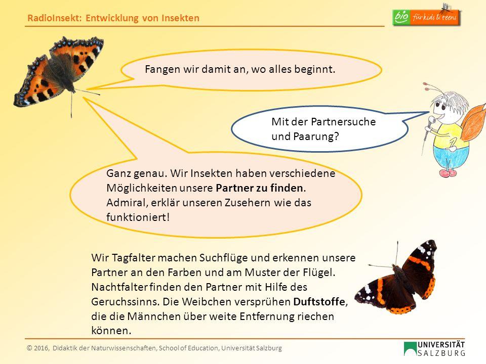 RadioInsekt: Entwicklung von Insekten © 2016, Didaktik der Naturwissenschaften, School of Education, Universität Salzburg Fangen wir damit an, wo alle