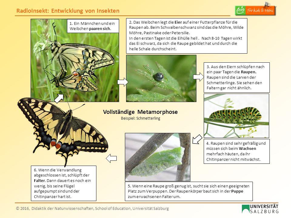 RadioInsekt: Entwicklung von Insekten © 2016, Didaktik der Naturwissenschaften, School of Education, Universität Salzburg 3. Aus den Eiern schlüpfen n