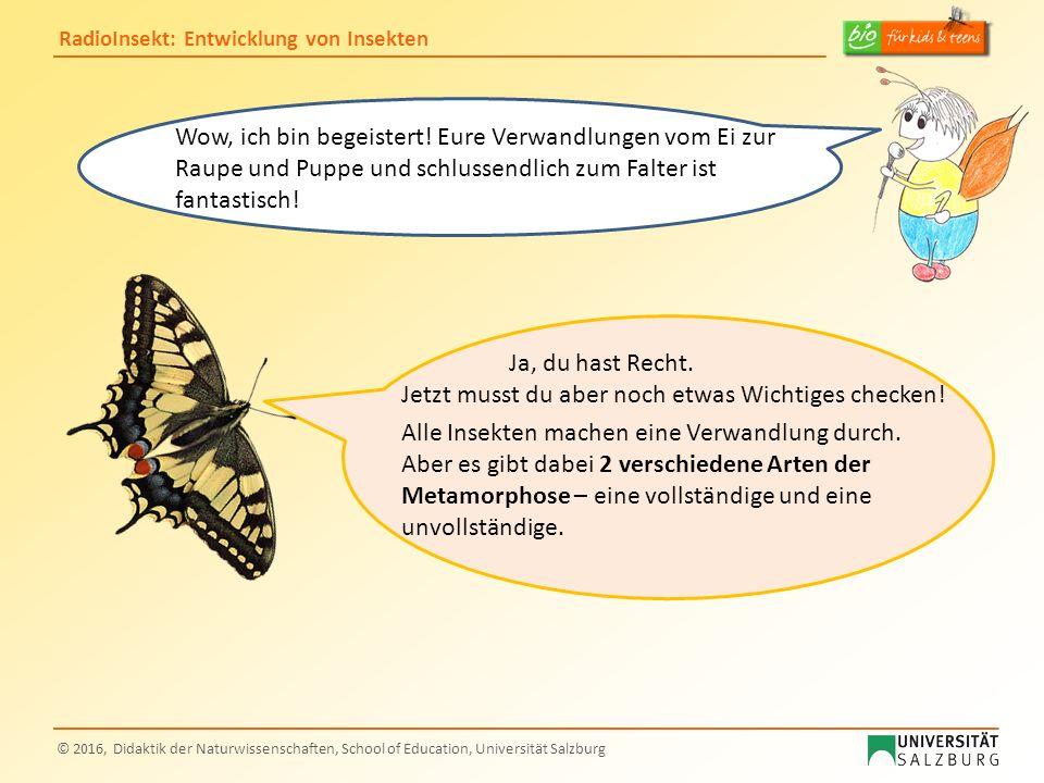 RadioInsekt: Entwicklung von Insekten © 2016, Didaktik der Naturwissenschaften, School of Education, Universität Salzburg Wow, ich bin begeistert! Eur