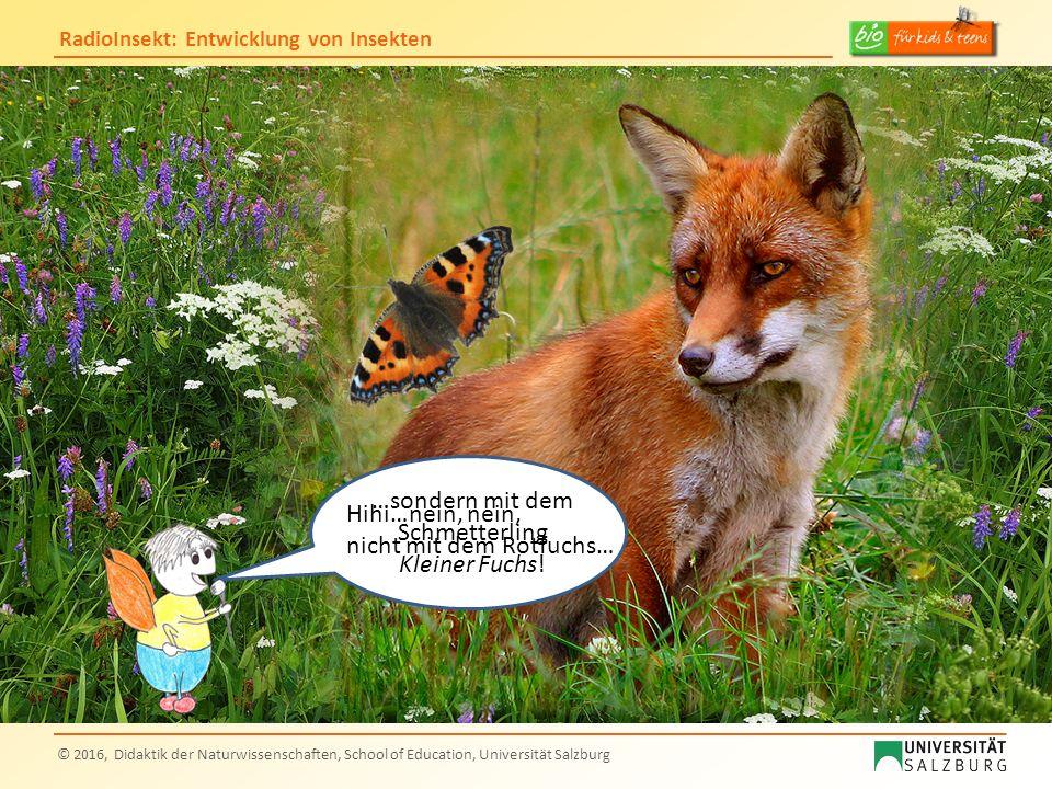 RadioInsekt: Entwicklung von Insekten © 2016, Didaktik der Naturwissenschaften, School of Education, Universität Salzburg Hihi…nein, nein, nicht mit d
