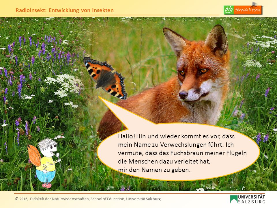 RadioInsekt: Entwicklung von Insekten © 2016, Didaktik der Naturwissenschaften, School of Education, Universität Salzburg Hallo Kleiner Fuchs.