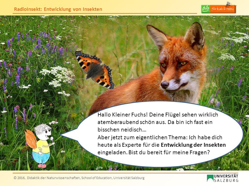 RadioInsekt: Entwicklung von Insekten © 2016, Didaktik der Naturwissenschaften, School of Education, Universität Salzburg Hallo Kleiner Fuchs! Deine F