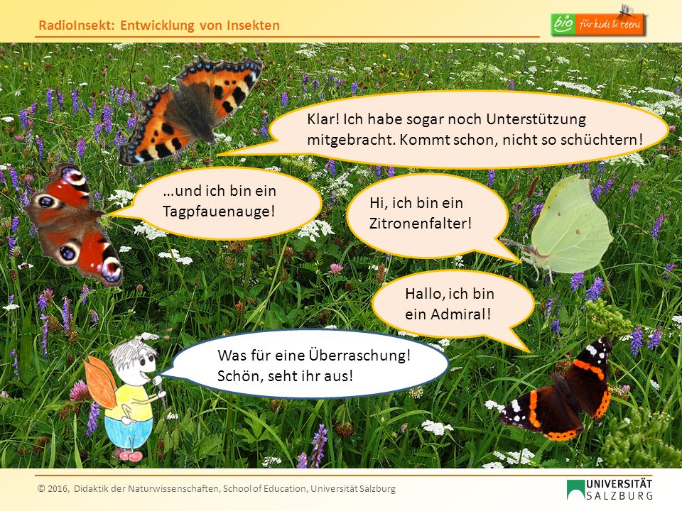 RadioInsekt: Entwicklung von Insekten © 2016, Didaktik der Naturwissenschaften, School of Education, Universität Salzburg Wo bleibt der Schwalbenschwanz….