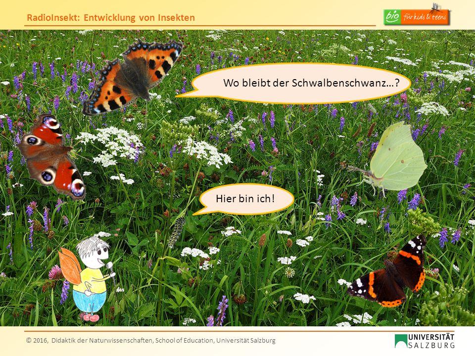 RadioInsekt: Entwicklung von Insekten © 2016, Didaktik der Naturwissenschaften, School of Education, Universität Salzburg Wo bleibt der Schwalbenschwa