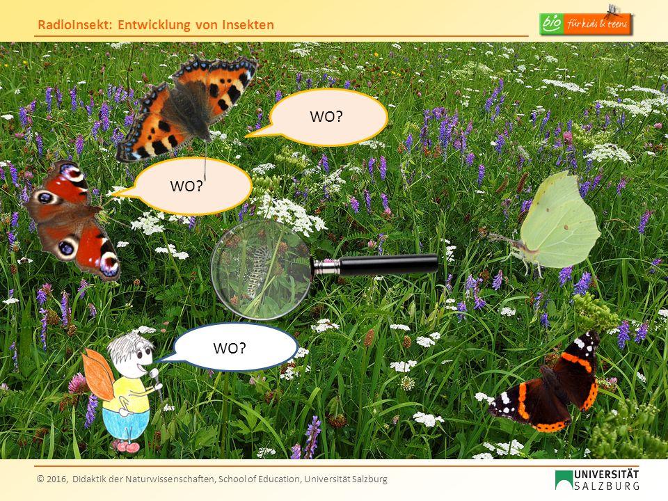RadioInsekt: Entwicklung von Insekten © 2016, Didaktik der Naturwissenschaften, School of Education, Universität Salzburg Du sieht ja ganz anders aus als ich dich mir vorgestellt hatte?!