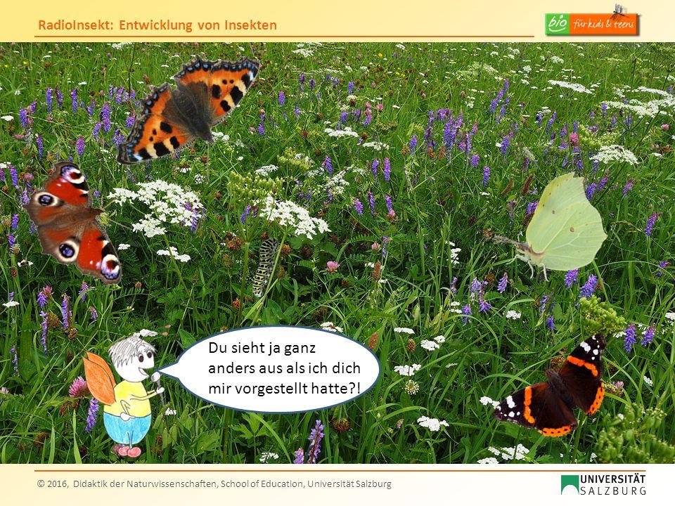 RadioInsekt: Entwicklung von Insekten © 2016, Didaktik der Naturwissenschaften, School of Education, Universität Salzburg Du sieht ja ganz anders aus