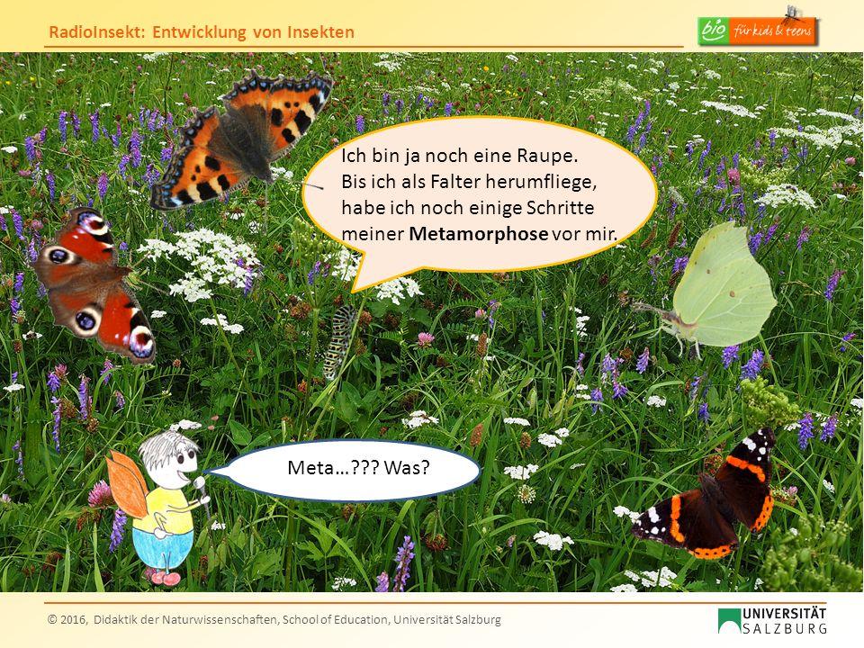 RadioInsekt: Entwicklung von Insekten © 2016, Didaktik der Naturwissenschaften, School of Education, Universität Salzburg Quellen: Folie 17 (unvollständige Metamorphose) Paarung: https://upload.wikimedia.org/wikipedia/commons/thumb/e/e7/Dragonfly_insect_pairing.jpg/319px-Dragonfly_insect_pairing.jpg?uselang=de Eiablage: https://de.wikipedia.org/wiki/Gro%C3%9Fe_K%C3%B6nigslibelle#/media/File:Emperor_dragonfly.jpg, Autor: Andreas Trepte Larve: https://upload.wikimedia.org/wikipedia/commons/5/57/Larve_d%27Anax_empereur.JPG ; Schlüpfen: https://commons.wikimedia.org/wiki/File:Anax_Imperator_2(loz).JPG, Autor: Loz