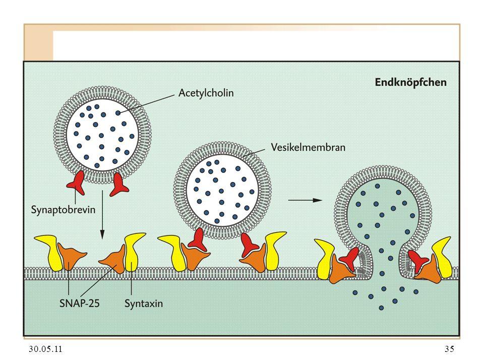30.05.1136 Anwendung von Botulinum-Toxin in der Schönheitsindustrie.