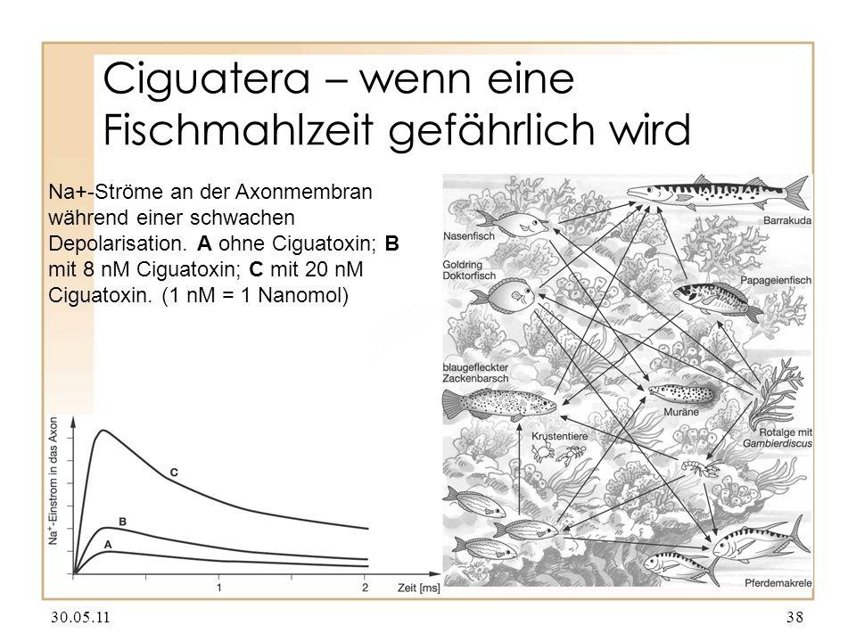 Ciguatera – wenn eine Fischmahlzeit gefährlich wird 30.05.1138 Na+-Ströme an der Axonmembran während einer schwachen Depolarisation. A ohne Ciguatoxin
