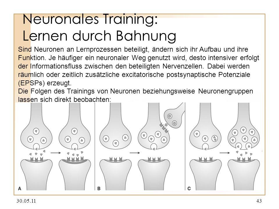 Neuronales Training: Lernen durch Bahnung 30.05.1143 Sind Neuronen an Lernprozessen beteiligt, ändern sich ihr Aufbau und ihre Funktion. Je häufiger e