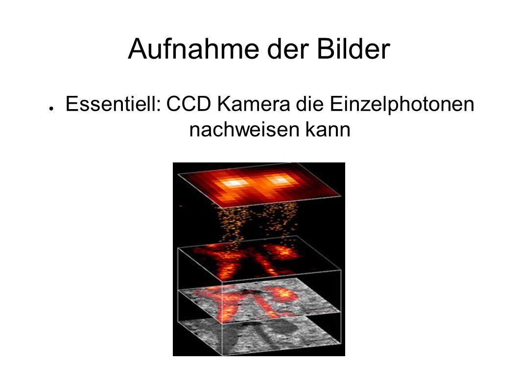 Aufnahme der Bilder ● Essentiell: CCD Kamera die Einzelphotonen nachweisen kann
