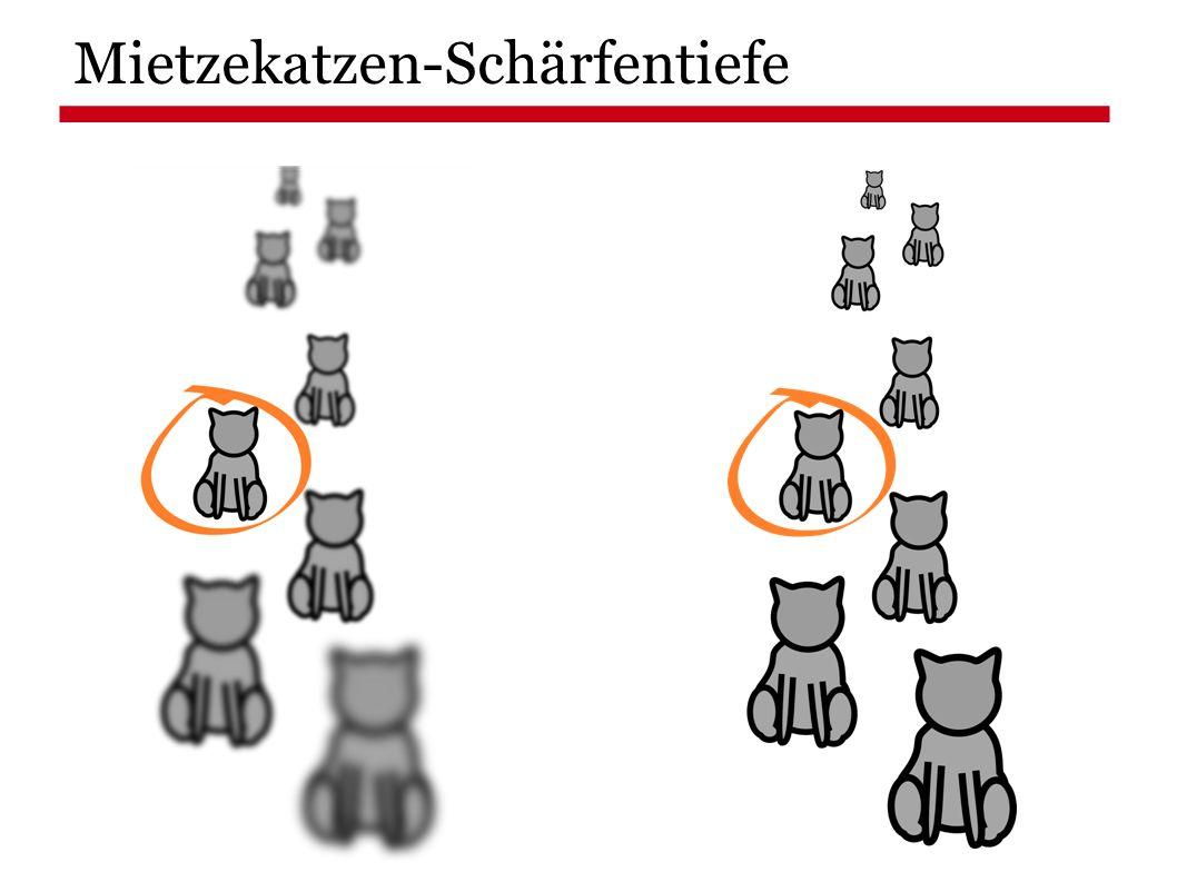 Mietzekatzen-Schärfentiefe