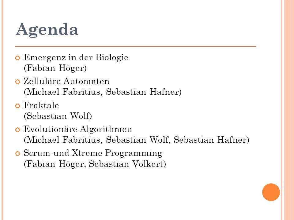 Agenda Emergenz in der Biologie (Fabian Höger) Zelluläre Automaten (Michael Fabritius, Sebastian Hafner) Fraktale (Sebastian Wolf) Evolutionäre Algorithmen (Michael Fabritius, Sebastian Wolf, Sebastian Hafner) Scrum und Xtreme Programming (Fabian Höger, Sebastian Volkert)