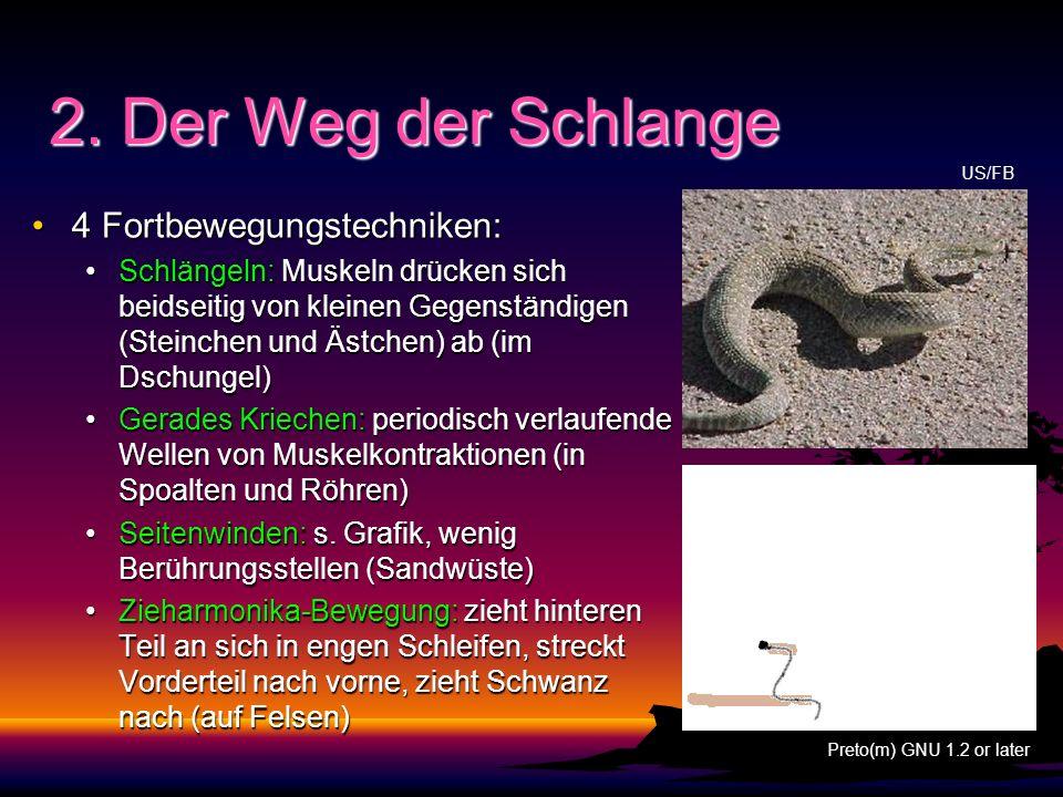 2. Der Weg der Schlange 4 Fortbewegungstechniken:4 Fortbewegungstechniken: Schlängeln: Muskeln drücken sich beidseitig von kleinen Gegenständigen (Ste