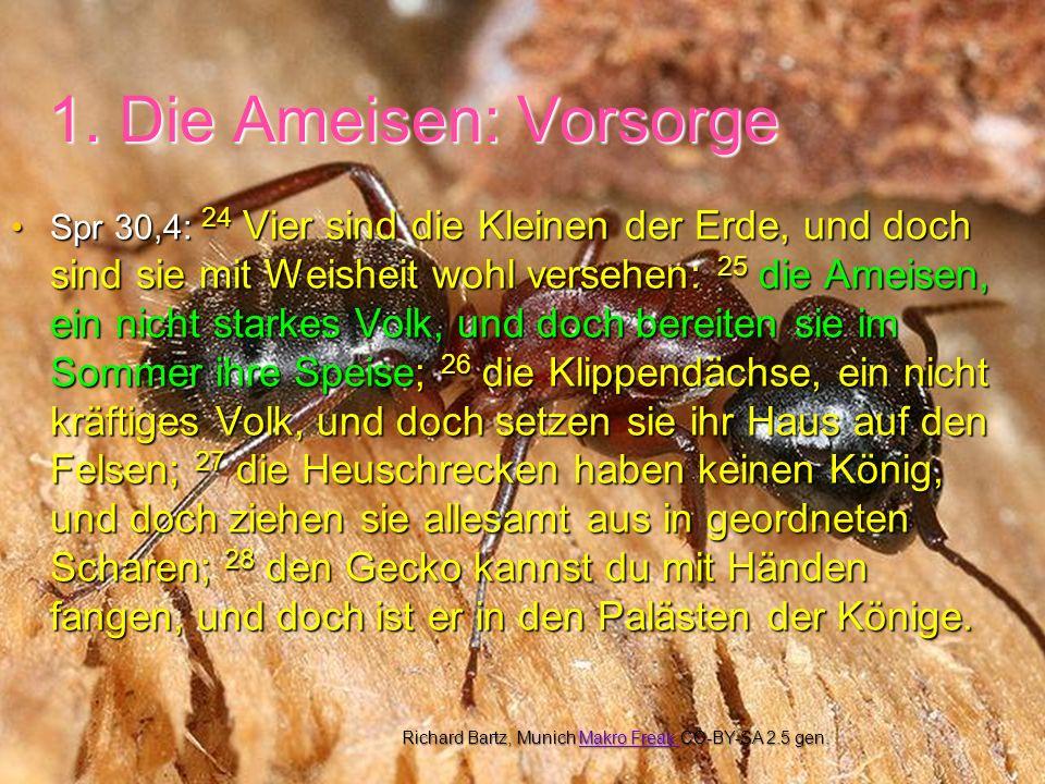 1. Die Ameisen: Vorsorge Spr 30,4: 24 Vier sind die Kleinen der Erde, und doch sind sie mit Weisheit wohl versehen: 25 die Ameisen, ein nicht starkes