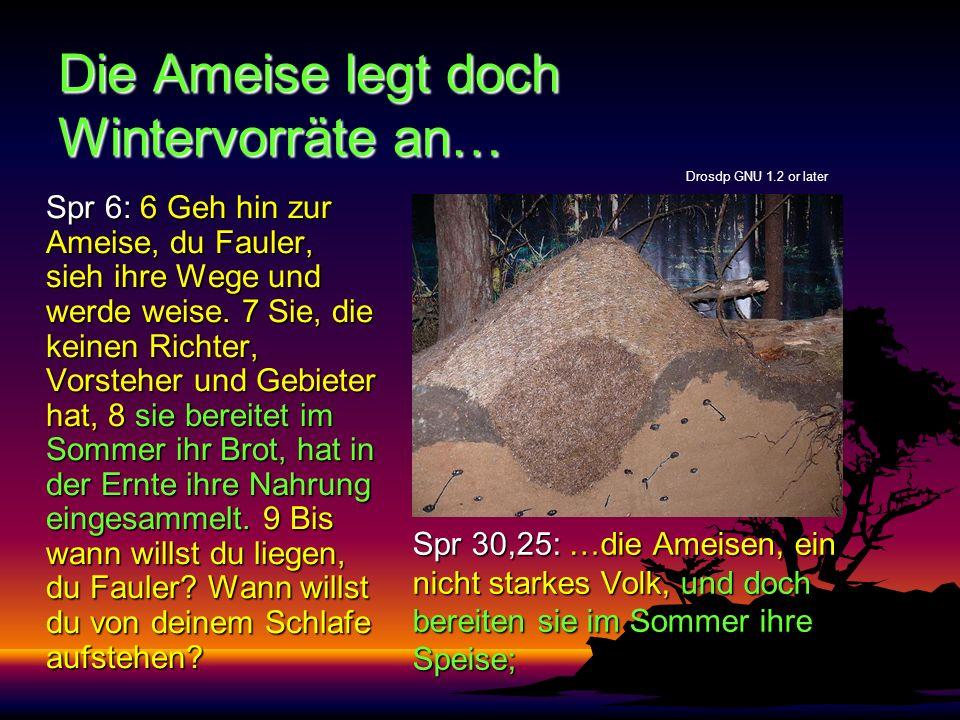 Die Ameise legt doch Wintervorräte an… Spr 30,25: …die Ameisen, ein nicht starkes Volk, und doch bereiten sie im Sommer ihre Speise; Spr 6: 6 Geh hin zur Ameise, du Fauler, sieh ihre Wege und werde weise.