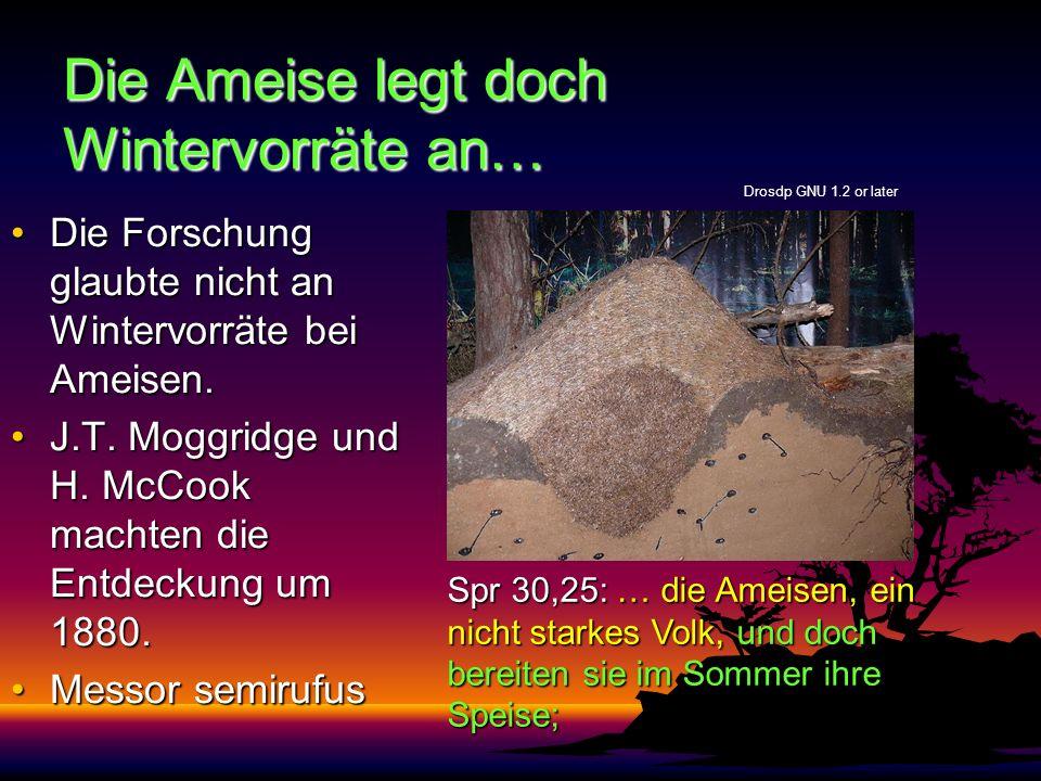 Die Ameise legt doch Wintervorräte an… Die Forschung glaubte nicht an Wintervorräte bei Ameisen.Die Forschung glaubte nicht an Wintervorräte bei Ameisen.