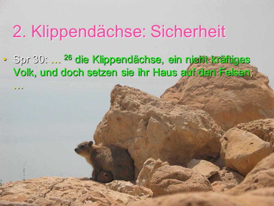 2. Klippendächse: Sicherheit Spr 30: … 26 die Klippendächse, ein nicht kräftiges Volk, und doch setzen sie ihr Haus auf den Felsen; …Spr 30: … 26 die