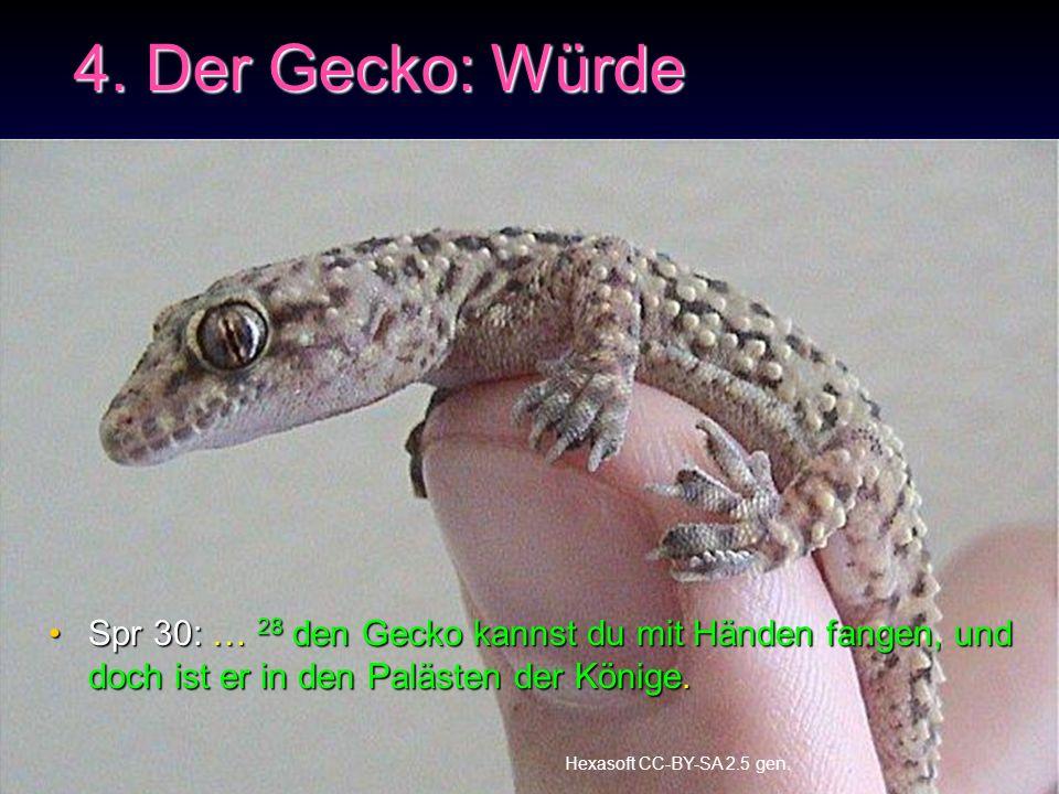 4. Der Gecko: Würde Spr 30: … 28 den Gecko kannst du mit Händen fangen, und doch ist er in den Palästen der Könige.Spr 30: … 28 den Gecko kannst du mi