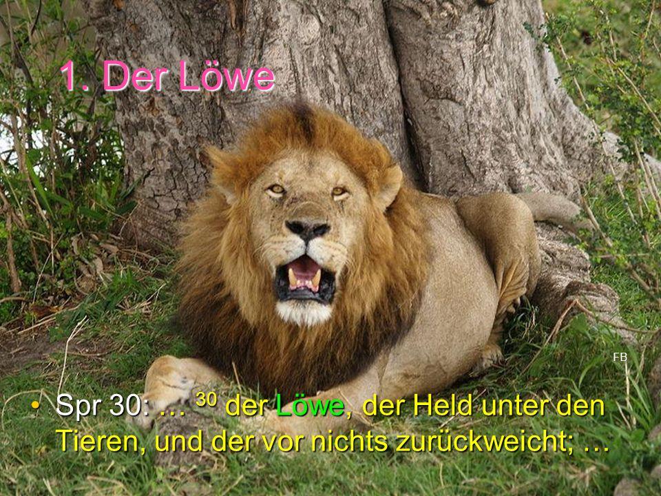 1. Der Löwe Spr 30: … 30 der Löwe, der Held unter den Tieren, und der vor nichts zurückweicht; …Spr 30: … 30 der Löwe, der Held unter den Tieren, und