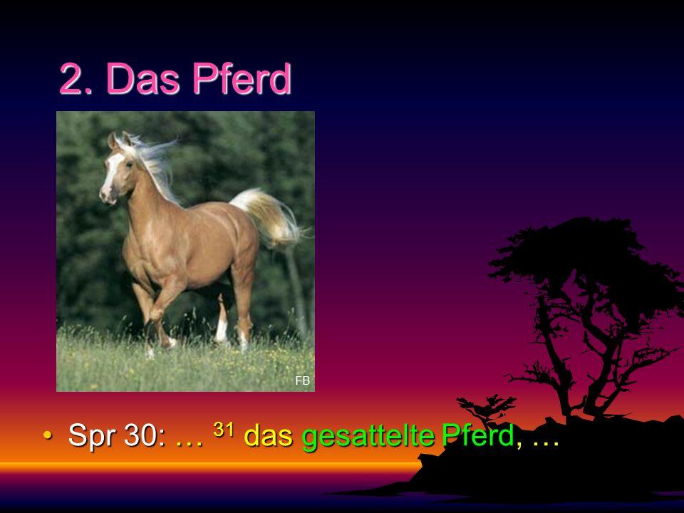 2. Das Pferd FB Spr 30: … 31 das gesattelte Pferd, …Spr 30: … 31 das gesattelte Pferd, …