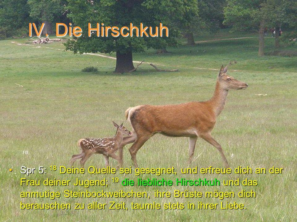 IV. Die Hirschkuh Spr 5: 18 Deine Quelle sei gesegnet, und erfreue dich an der Frau deiner Jugend; 19 die liebliche Hirschkuh und das anmutige Steinbo