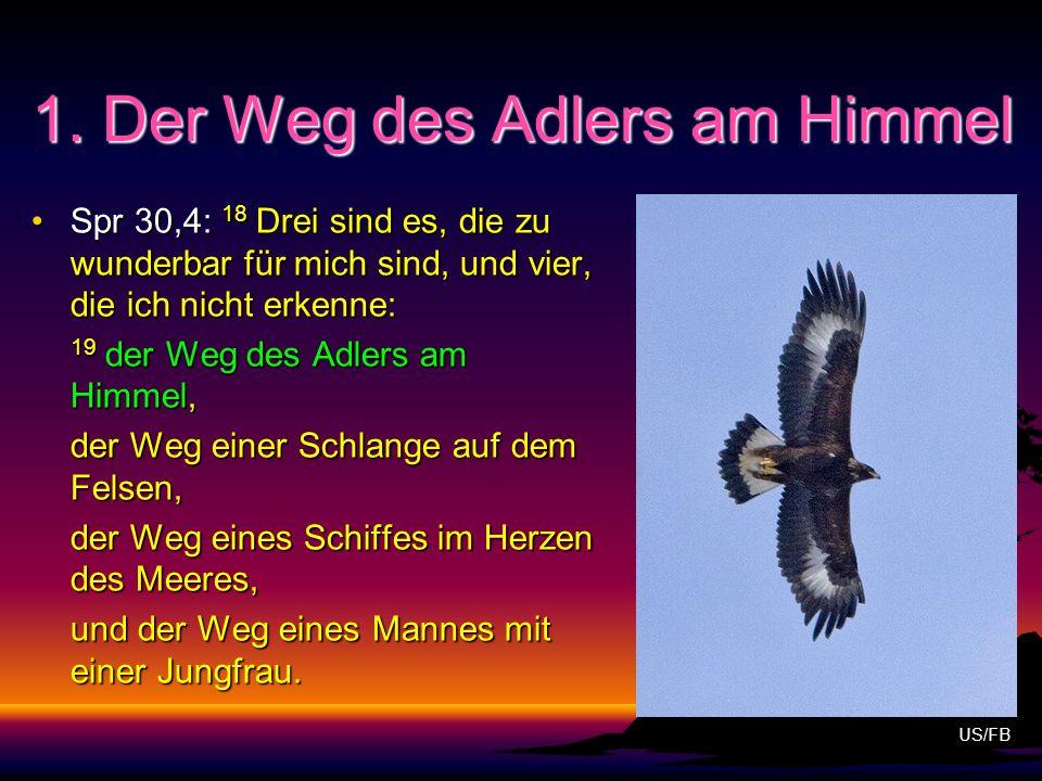 1. Der Weg des Adlers am Himmel Spr 30,4: 18 Drei sind es, die zu wunderbar für mich sind, und vier, die ich nicht erkenne:Spr 30,4: 18 Drei sind es,