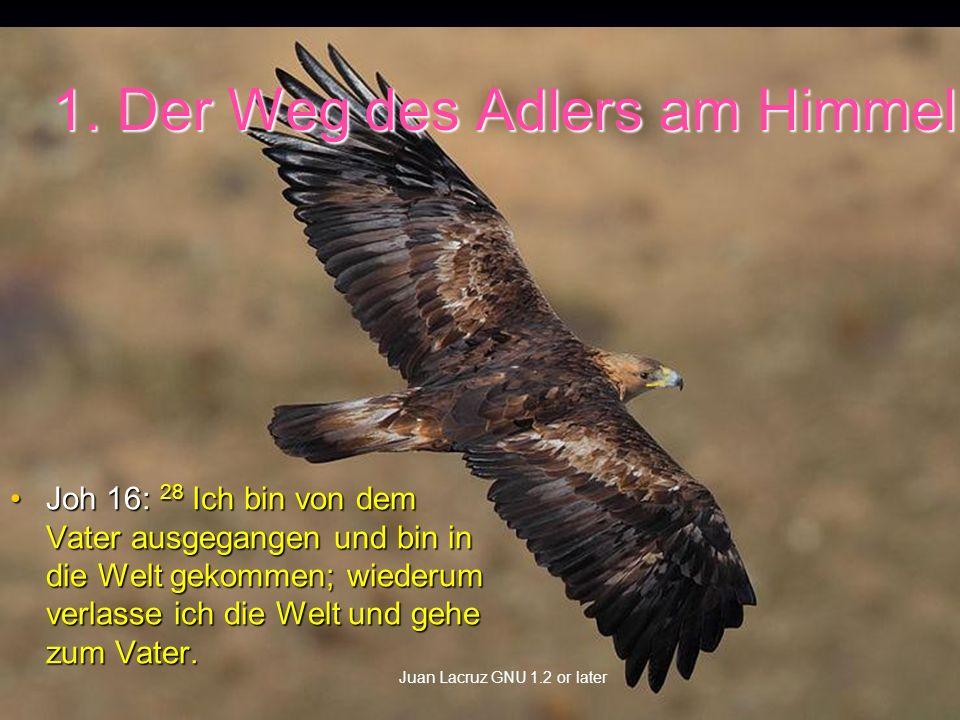 1. Der Weg des Adlers am Himmel Joh 16: 28 Ich bin von dem Vater ausgegangen und bin in die Welt gekommen; wiederum verlasse ich die Welt und gehe zum