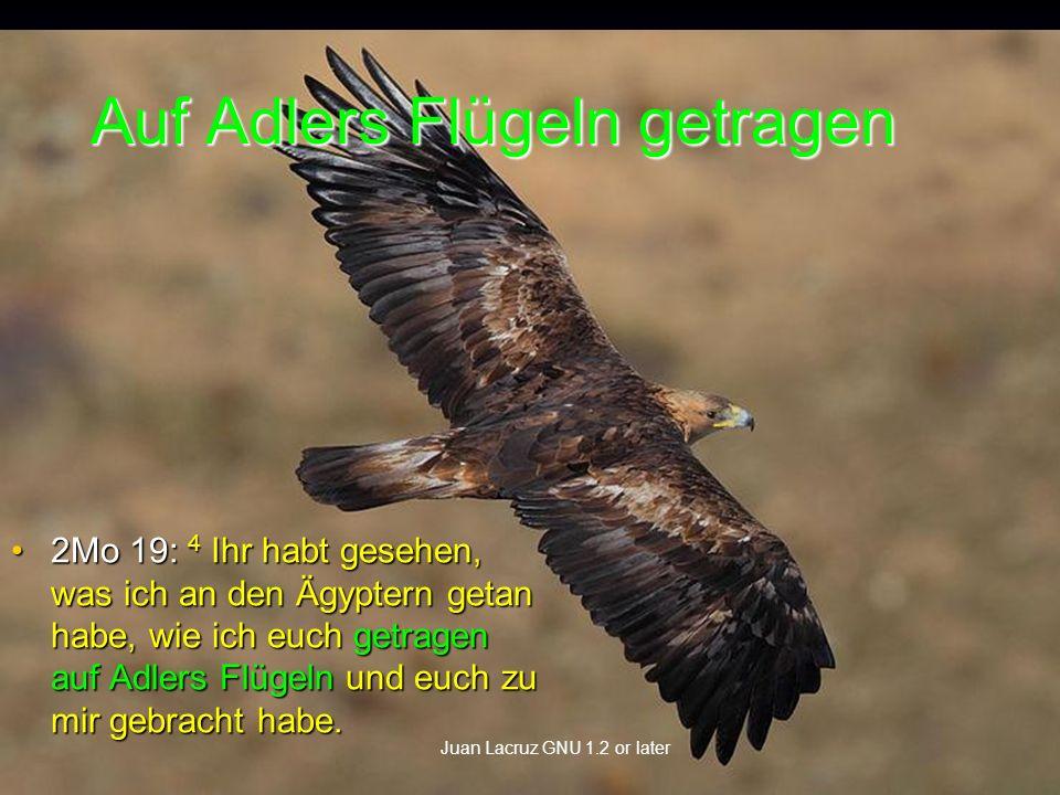 Auf Adlers Flügeln getragen 2Mo 19: 4 Ihr habt gesehen, was ich an den Ägyptern getan habe, wie ich euch getragen auf Adlers Flügeln und euch zu mir gebracht habe.2Mo 19: 4 Ihr habt gesehen, was ich an den Ägyptern getan habe, wie ich euch getragen auf Adlers Flügeln und euch zu mir gebracht habe.