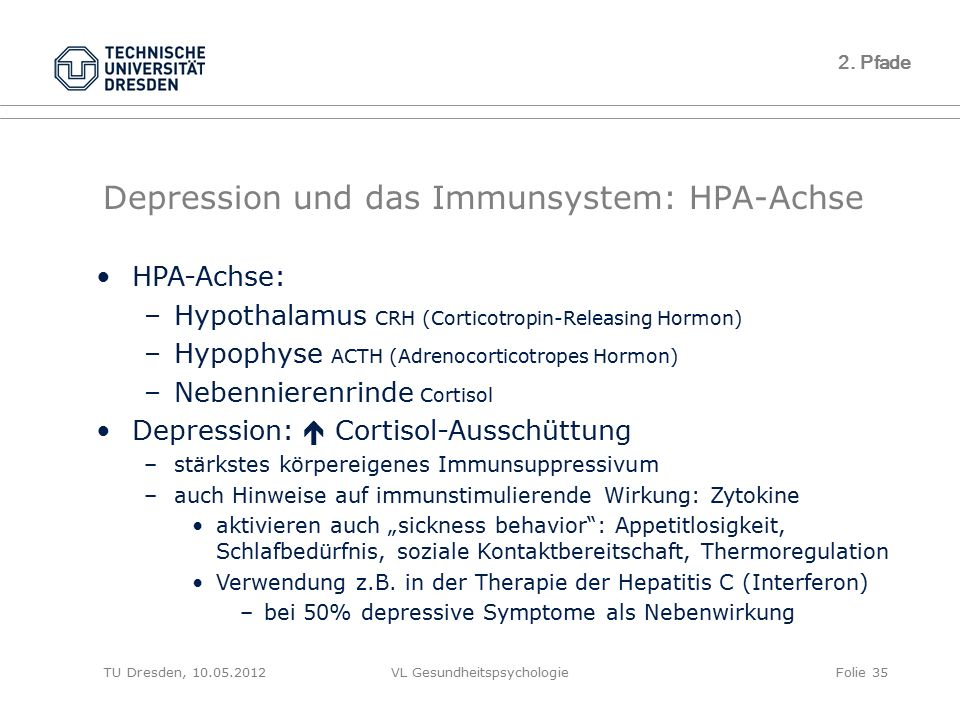 TU Dresden, 10.05.2012VL GesundheitspsychologieFolie 35 2. Pfade Depression und das Immunsystem: HPA-Achse HPA-Achse: –Hypothalamus CRH (Corticotropin