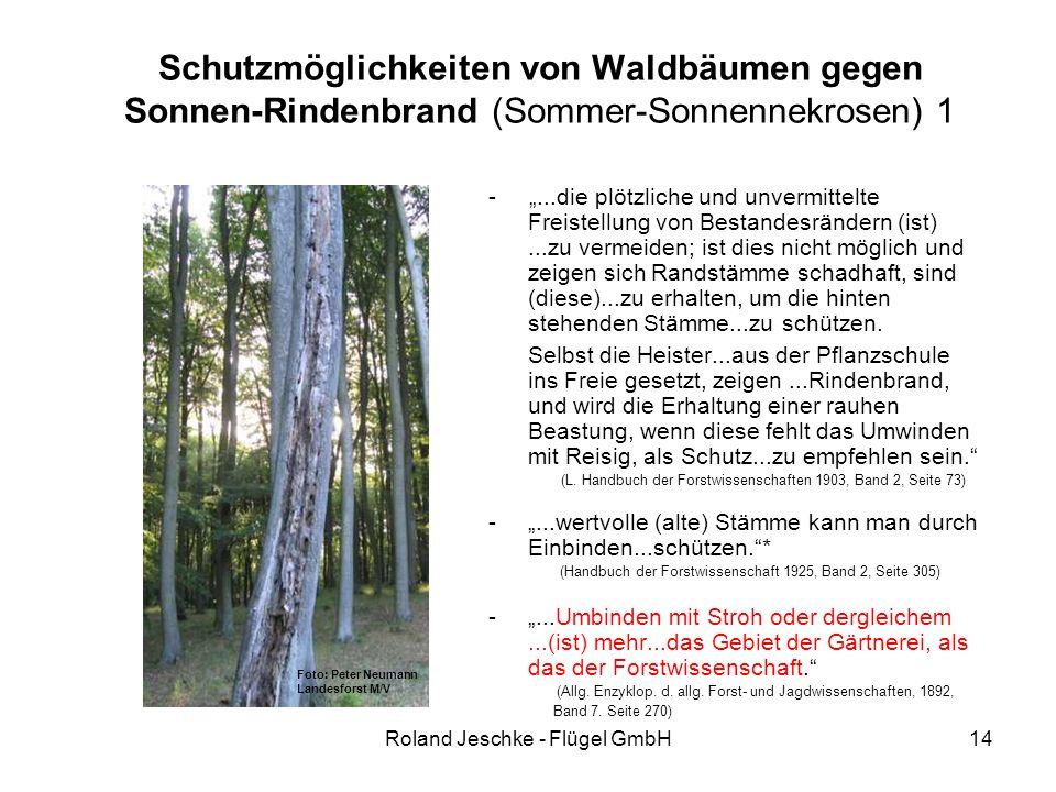 """Roland Jeschke - Flügel GmbH14 Schutzmöglichkeiten von Waldbäumen gegen Sonnen-Rindenbrand (Sommer-Sonnennekrosen) 1 - """"...die plötzliche und unvermittelte Freistellung von Bestandesrändern (ist)...zu vermeiden; ist dies nicht möglich und zeigen sich Randstämme schadhaft, sind (diese)...zu erhalten, um die hinten stehenden Stämme...zu schützen."""