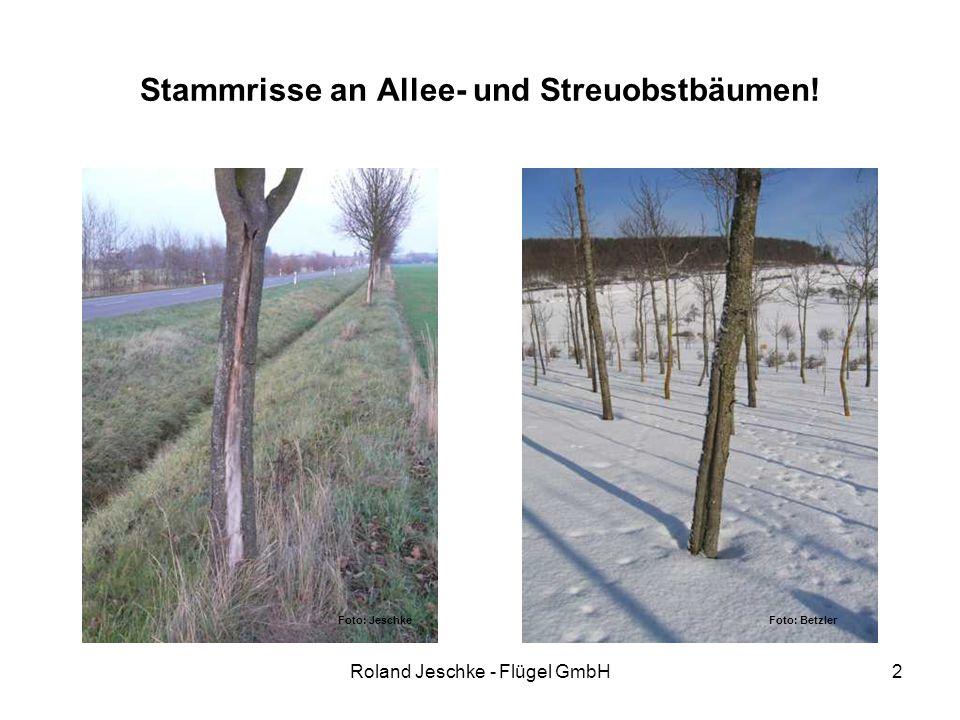 Roland Jeschke - Flügel GmbH2 Stammrisse an Allee- und Streuobstbäumen! Foto: Jeschke Foto: Betzler