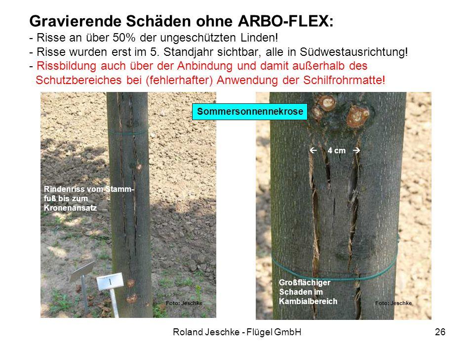 Roland Jeschke - Flügel GmbH26 Gravierende Schäden ohne ARBO-FLEX: - Risse an über 50% der ungeschützten Linden! - Risse wurden erst im 5. Standjahr s