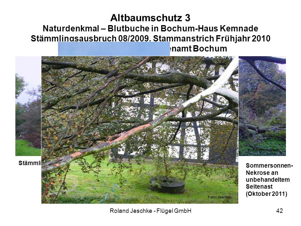 Roland Jeschke - Flügel GmbH42 Altbaumschutz 3 Naturdenkmal – Blutbuche in Bochum-Haus Kemnade Stämmlingsausbruch 08/2009, Stammanstrich Frühjahr 2010